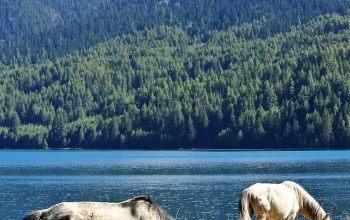 Rara Lake Trekking